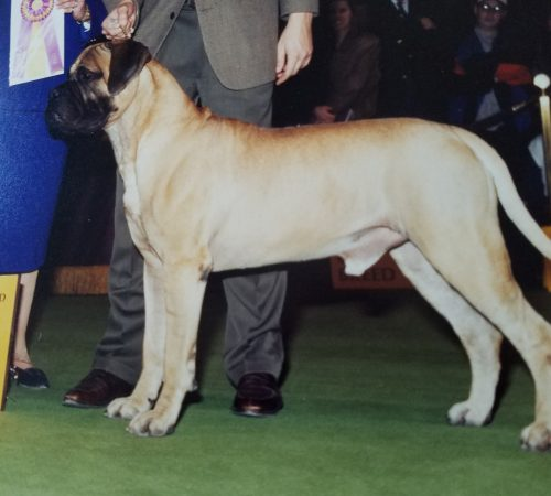 SIRE OF OUR UPCOMING LITTER